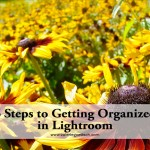 6 easy ways to get organized so you can clean out unneeded photos, trim your catalog and find images by keywords