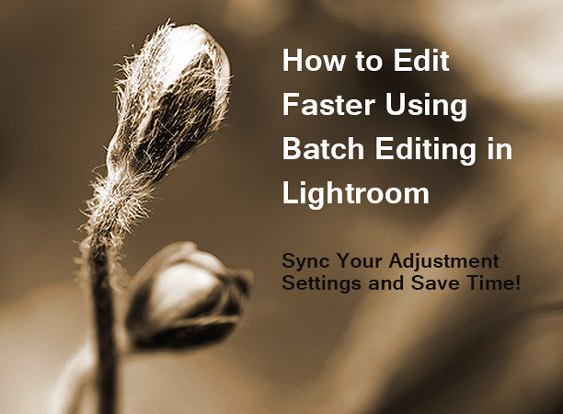How to edit faster using bath editing in Lightroom